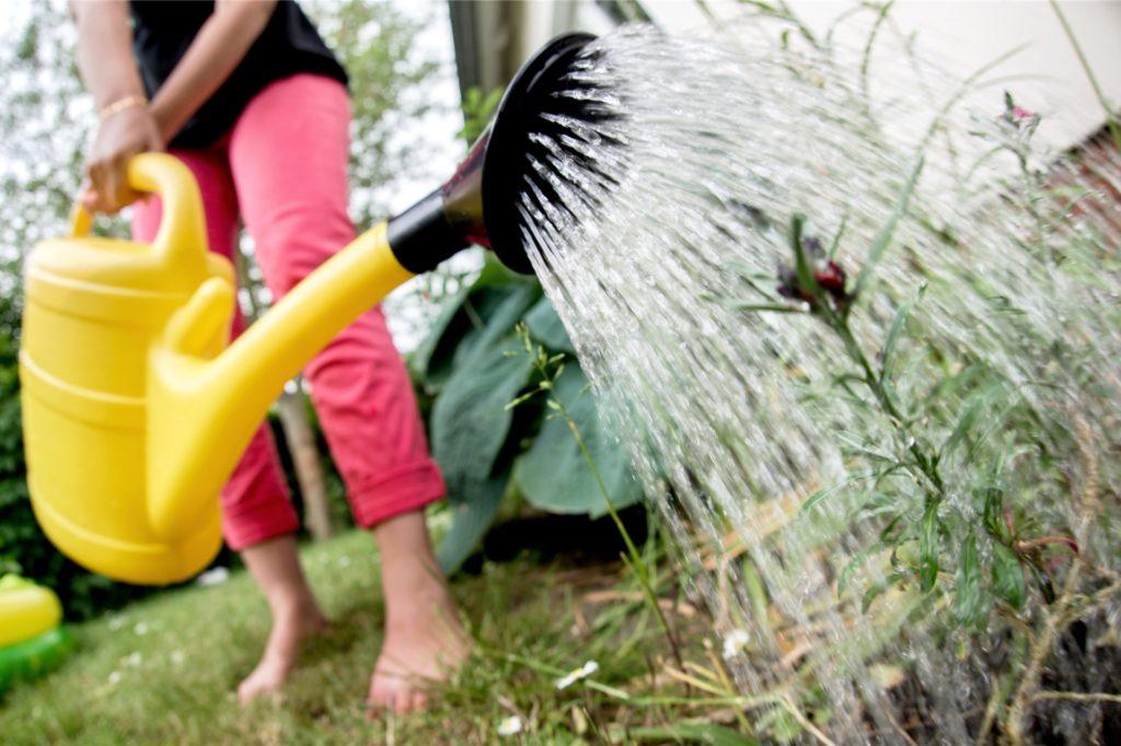 Die künftigen Bewohner der in der ehemaligen Alisoschule geplanten Wohnungen sollen bestimmte Service-Leistungen wie zum Beispiel die Gartenpflege buchen können.