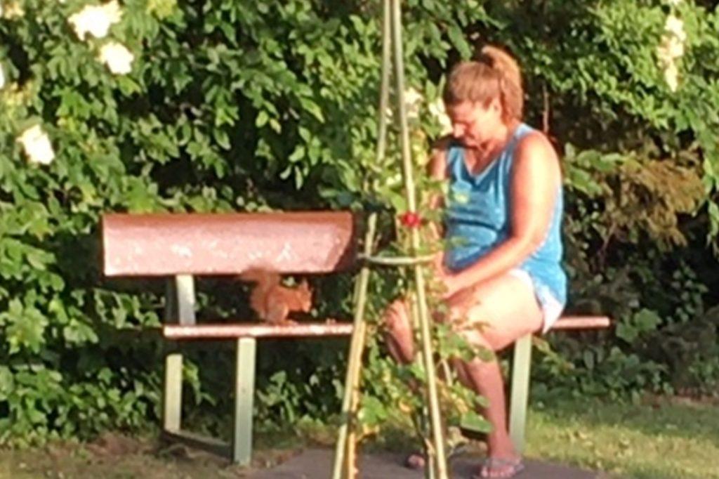 Kerstin Lügger füttert das Eichhörnchen in ihrer Nachbarschaft täglich mit Nüssen. Es ging soweit, dass es ihr sogar aus der Hand fraß. Es waren sogar einmal drei gleichzeitig da, aber nur eines kam ihr ganz nah.