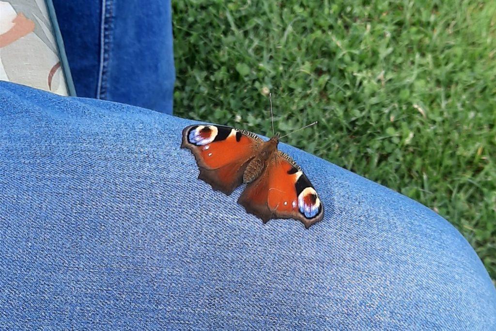 Warum auf einer Blume rasten, wenn es auch auf dem Hosenbein von Petra Kittl geht, dachte sich dieser Schmetterling.