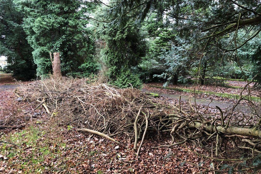 Ganz bewusst wird auf dem Westfriedhof Totholz liegen gelassen: Es bietet Igeln und anderen Kleintieren Unterschlupf.