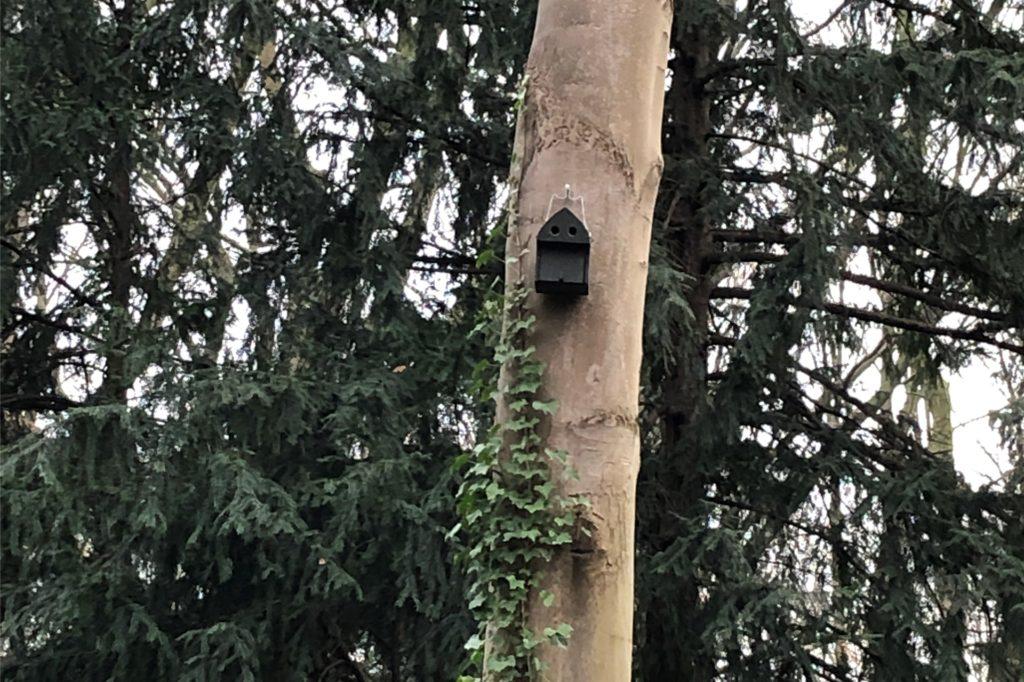Auch Fledermäuse finden auf dem Westfriedhof ein Zuhause: An mehreren Bäumen hängen Quartierkästen für sie.