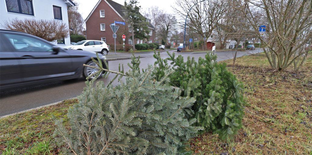 Weihnachtsbäume 2021