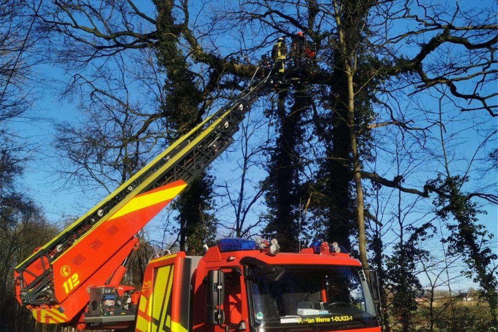 Ein großer Ast drohte, aus einem Baum auf einen Gehweg in Werne-Horst zu stürzen.
