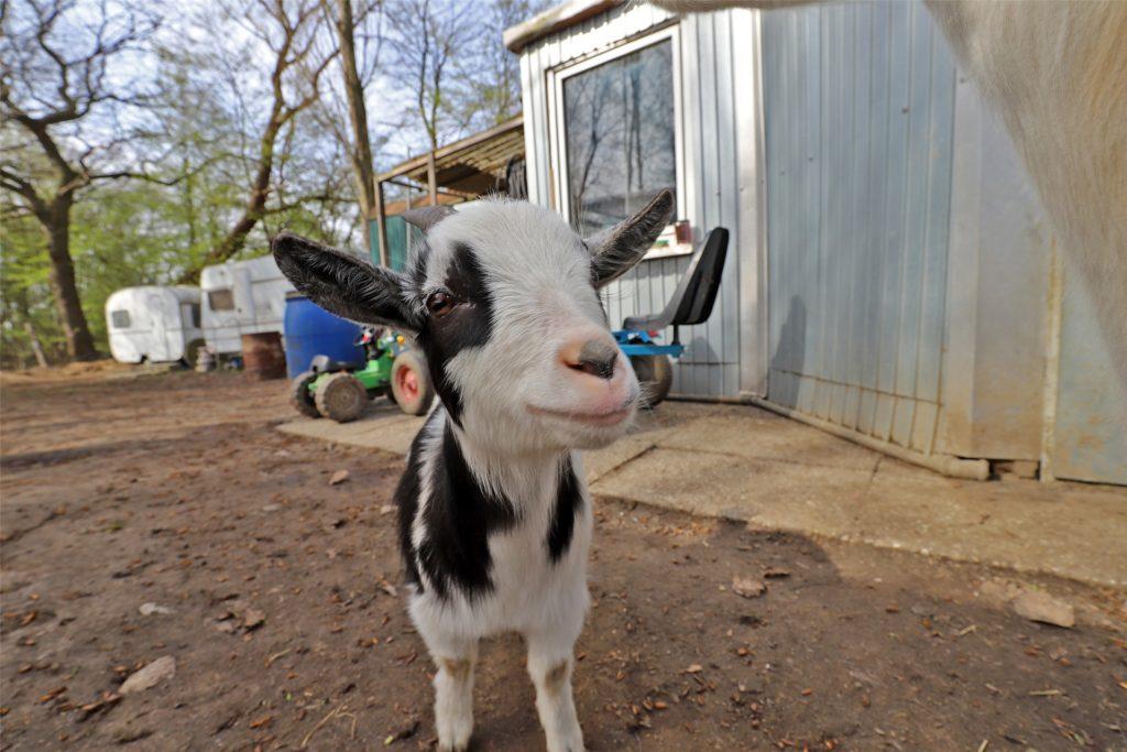 Auch Emma fühlt sich offenbar pudelwohl auf der Shetty-Ranch in Nachbarschaft der vielen anderen Tiere.