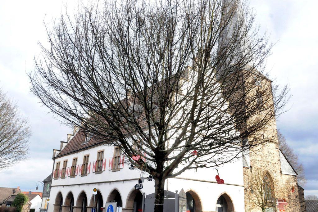 Auch der Baum an der Zufahrt zum Markt darf wieder ausschlagen. Vorerst muss er nicht die Säge fürchten.