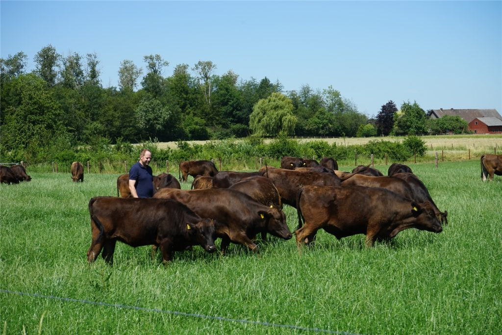 Eine Wagyu-Rindderherde mit Züchter Patrick Balster.