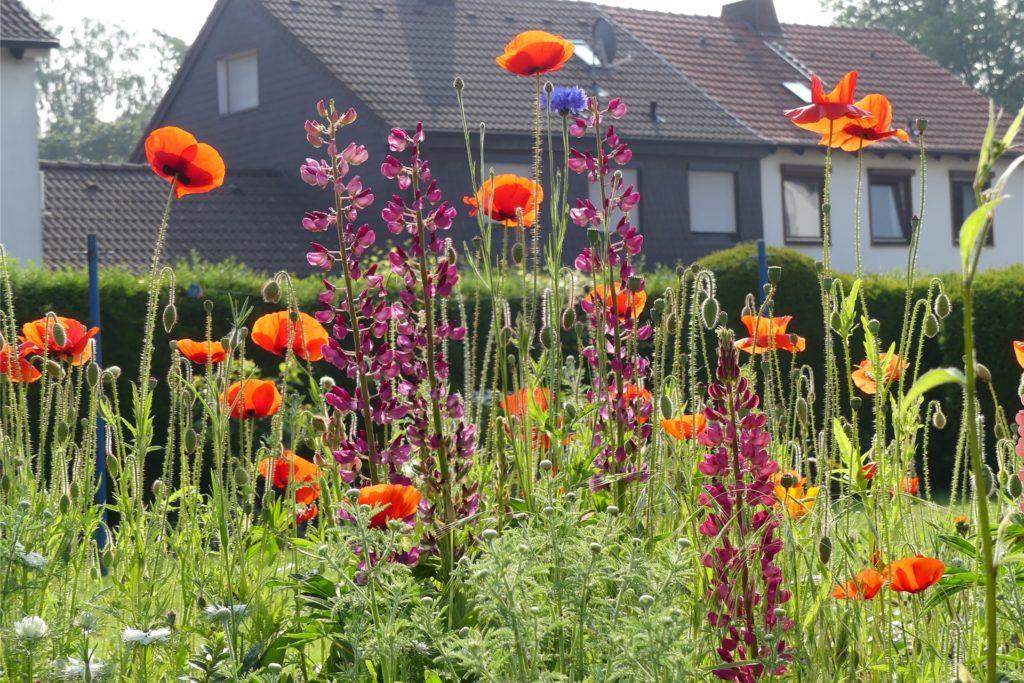 Im Krankenhaus hatte Irmgard Fulfs oft an ihren schönen Garten gedacht.