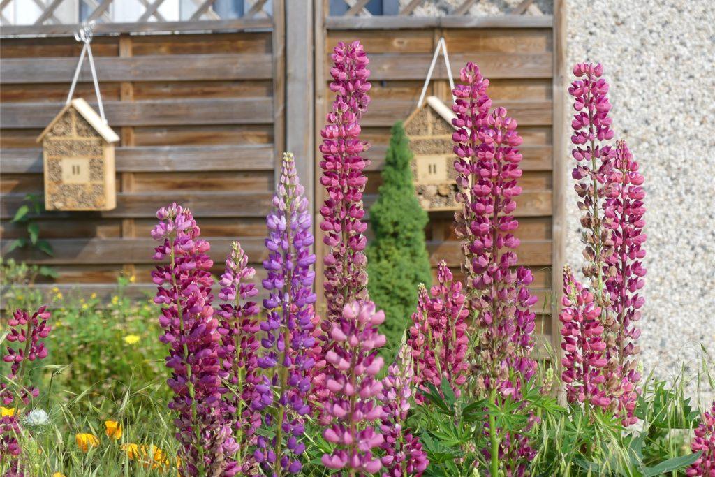 Bienenhotels hängen am Zaun: Dieser Garten ist insektenfreundlich.