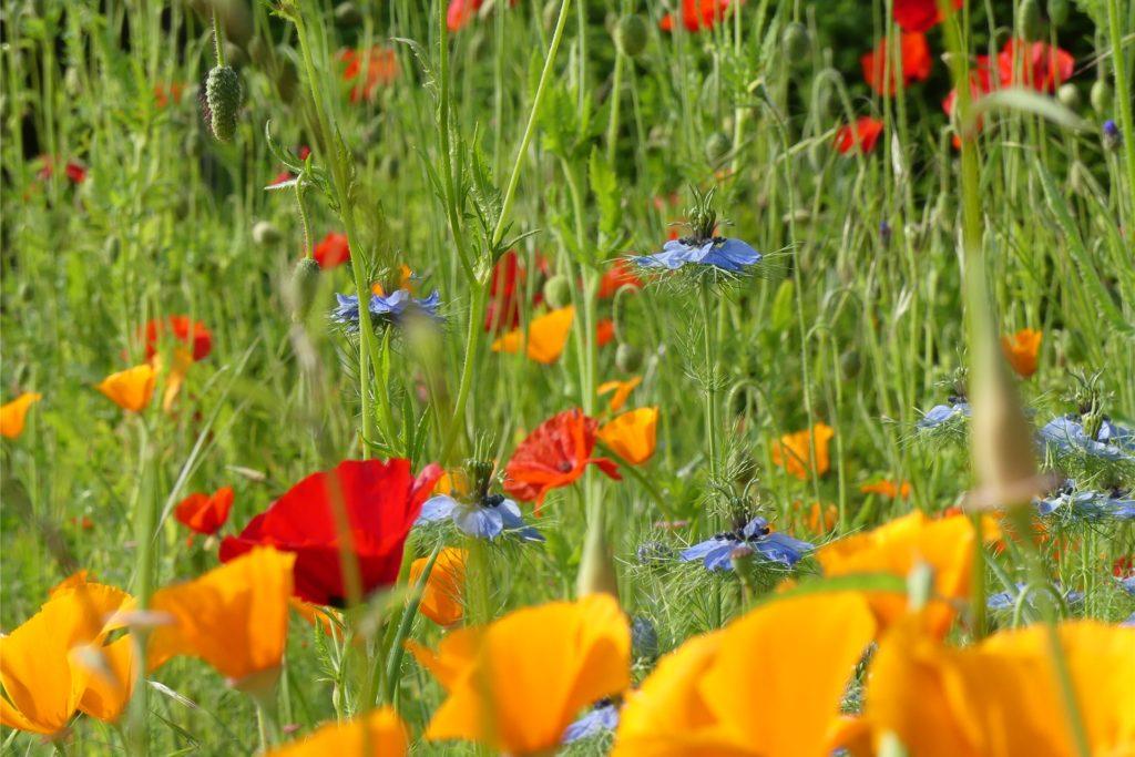 Der Garten in Westhofen steht in voller Blüte.