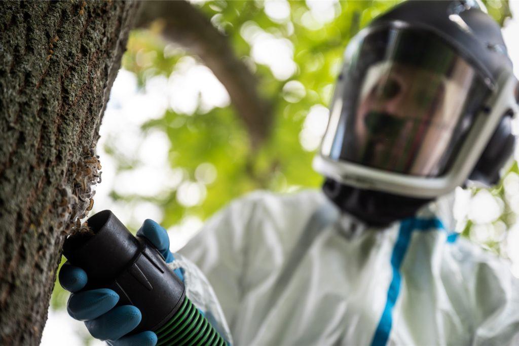 Wo die Stadt Unna Eichenprozessionsspinner bekämpft, tut sie es auf diese Weise: Spezialisierte Schädlingsbekämpfungsfirmen saugen die Raupen und ihre Nester unter großem Aufwand ab.